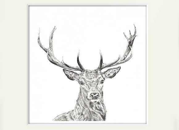Exmoor Red Stag