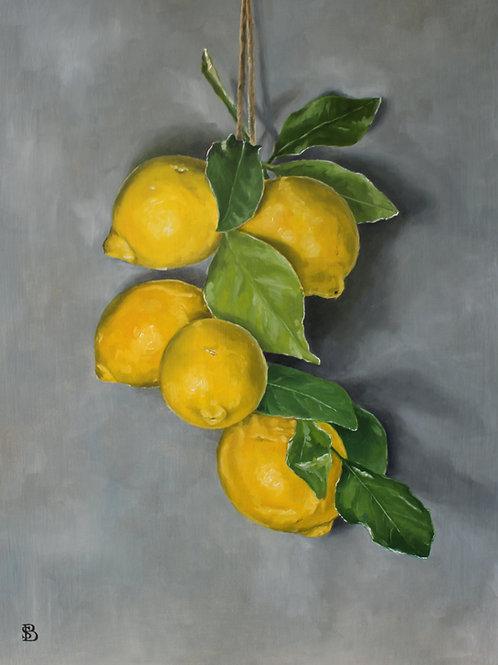 Hanging Sicilian Lemons