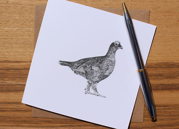 Grouse Drawing Greetings Card (Trade)