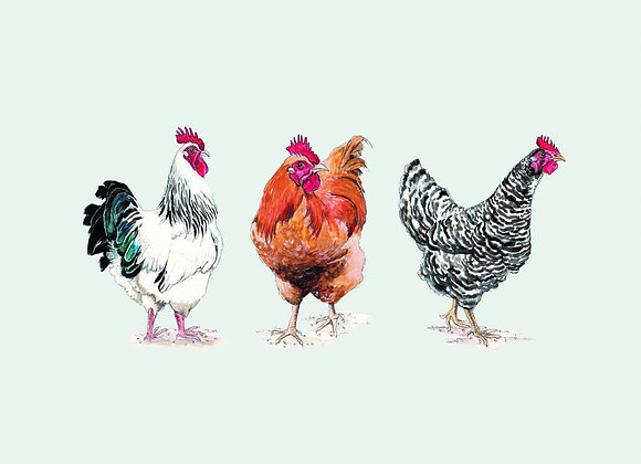 Trio of Chickens Greeting Card