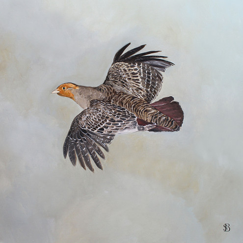 Flying English Partridge
