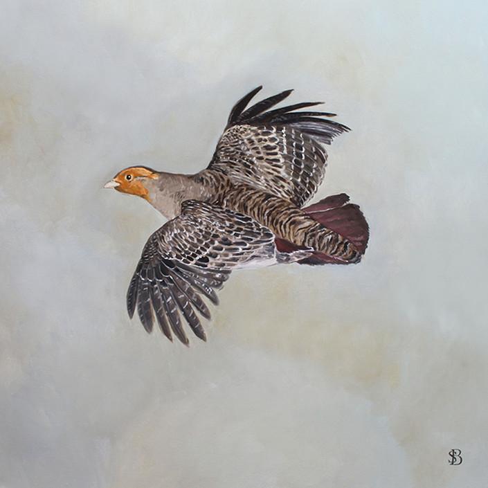 Flying English Partridge