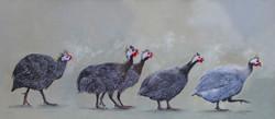 Five Guniea Fowl