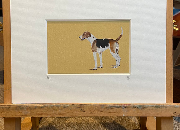 Hound Mounted Print 2