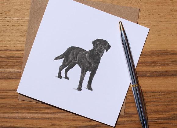 Black Labrador Greetings Card (Trade)