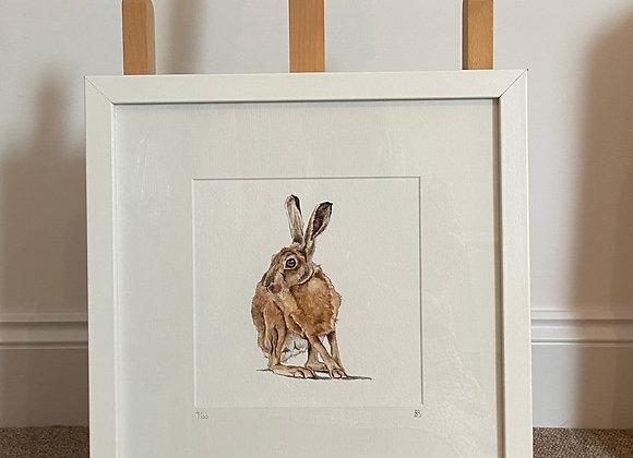 Brown Hare Framed Print