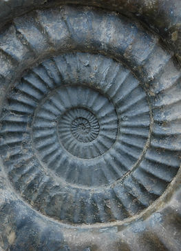 jurassiccoast_ammonite-close-up_2005_cop