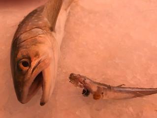 かなやま湖ワカサギ釣り情報