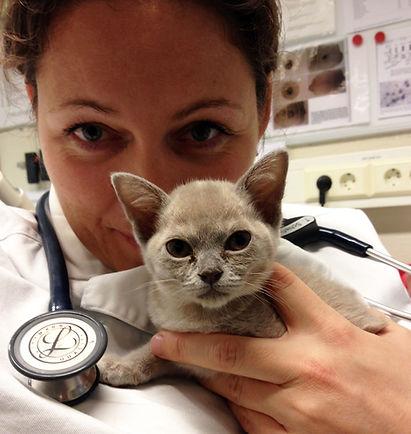 veterinaeren.jpg