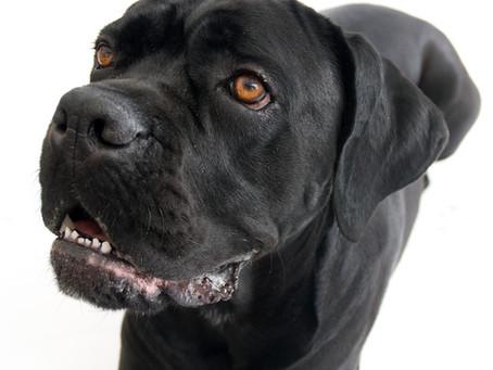 Hva er giftig for hunder?