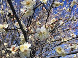粕川の春2