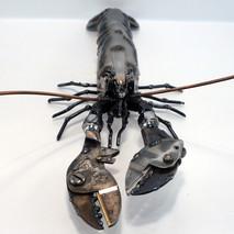 Lobster june 2020 (10)crop.jpg