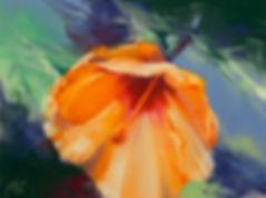 orange hibiscus-pastel-dsc_8439.jpg