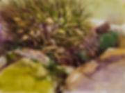 outcropping-Ripley.jpg