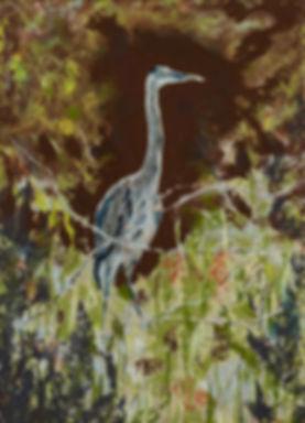 great blue heron-DSC_7431-sml.jpg