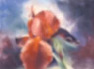 iris-iii-pastel-dsc_7749-sml.jpg
