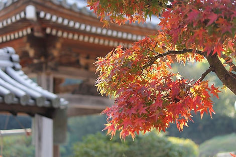 Autumn-leaves-red-temple_a66b17e59d5f9fd