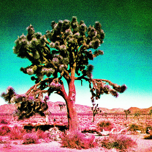 The Wasteland Series: Joshua Tree Pop (paper print)