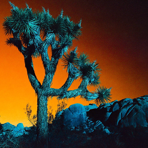 Turquoise Series: Single Joshua Tree (paper print)