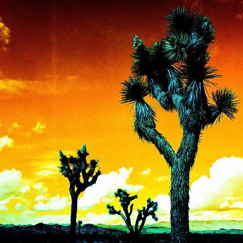 Turquoise Series: Three Joshua Trees (paper print)