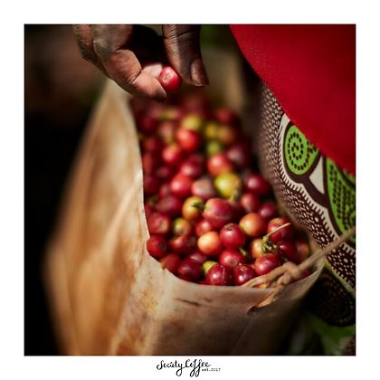 Kenya AB | Muranga County | Kamagogo Coffee Factory