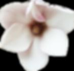 flowercut.png