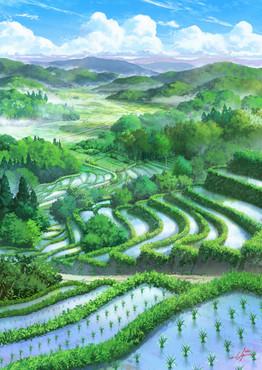 ricefield11grainlow.jpg
