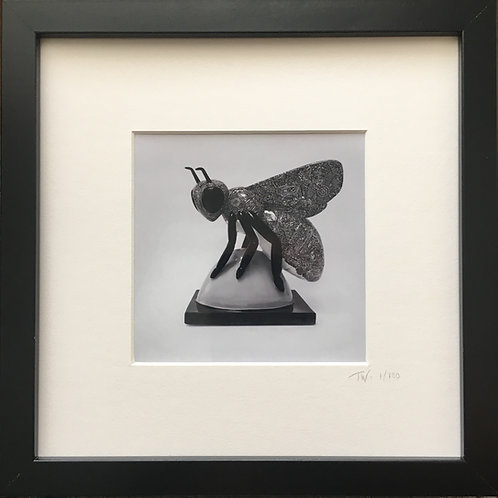Manchester Bee Photo print (25cm x 25cm framed) | Limited Edition of 100