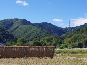 【春の山登り特集】初心者向け低山3選・運動とリフレッシュをしよう!