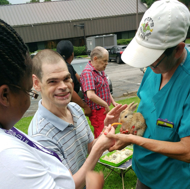 People petting rabbit outdoors
