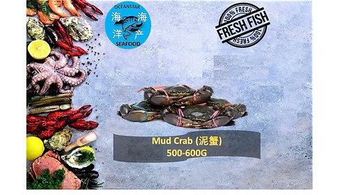 Mud Crab 泥蟹 500-600G