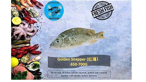 Golden Snapper ( 红䲃) 650-700G