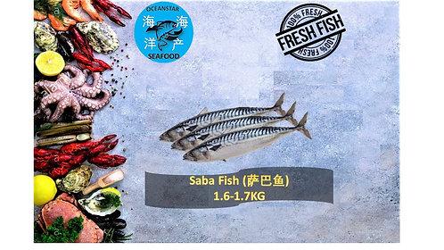 Saba Fish (萨巴鱼) 1.6-1.7KG