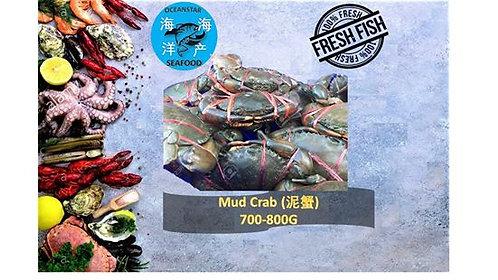 Mud Crab 泥蟹 700-800G