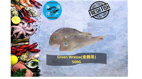 Green Wrasse(青鹦哥) 500G