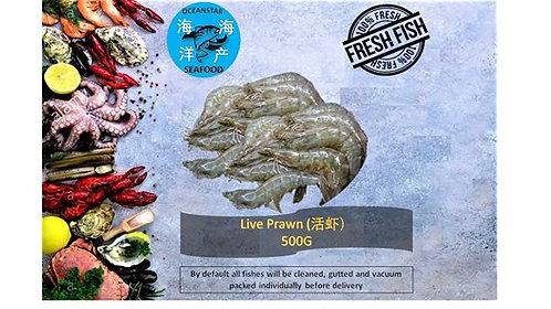 Live Prawn (活虾) 500G