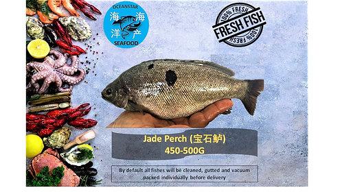 Jade Perch (宝石鲈) 450-500G