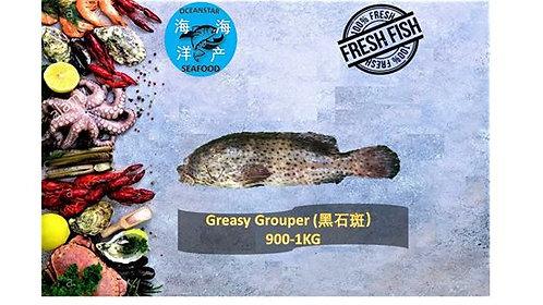 Greasy Grouper (黑石斑) 900-1KG