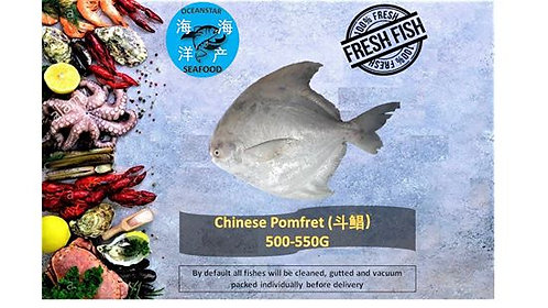 Chinese Pomfret (斗鲳) 500-550G