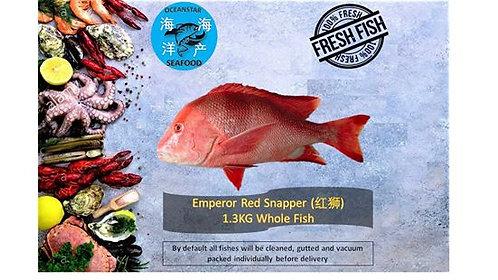 Emperor Red Snapper (红狮) 1.3KG