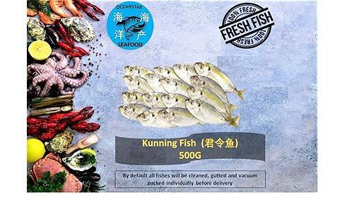 Kunning fish (君令鱼)500G