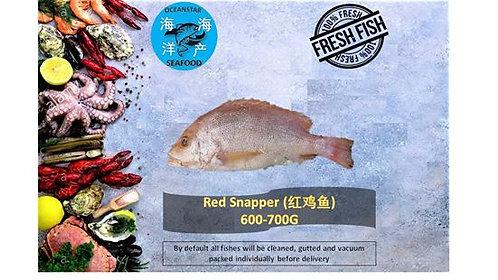 Red Snapper (红鸡鱼) 600-700G