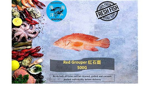 The Red Groupers (红石斑)500G