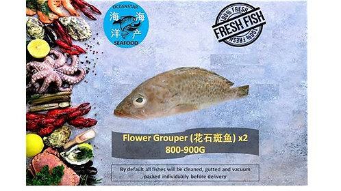 Wild flower grouper (花石斑魚) 800-900G
