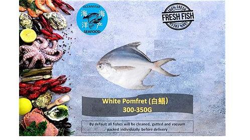White Pomfret (白鲳鱼) 300-350G