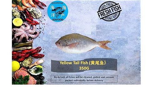 Yellowtail Fish (黄尾鱼) 350G
