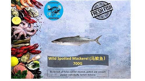 Wild Spotted Mackerel (马鲛鱼) 700G