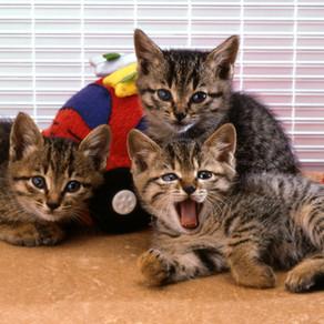 猫多頭飼育可能な賃貸物件について