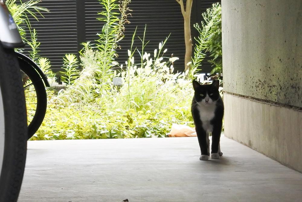ミナシアプロジェクト合同会社の管理物件で猫さんに遭遇