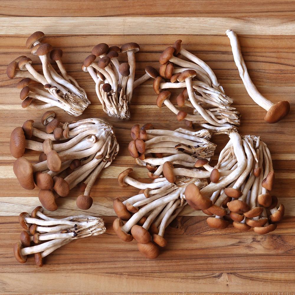 Pioppini mushrooms